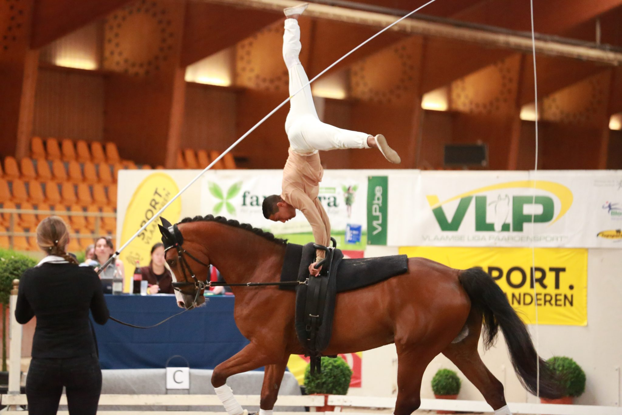 Lunging clinic Switzerland 11&12 Nov
