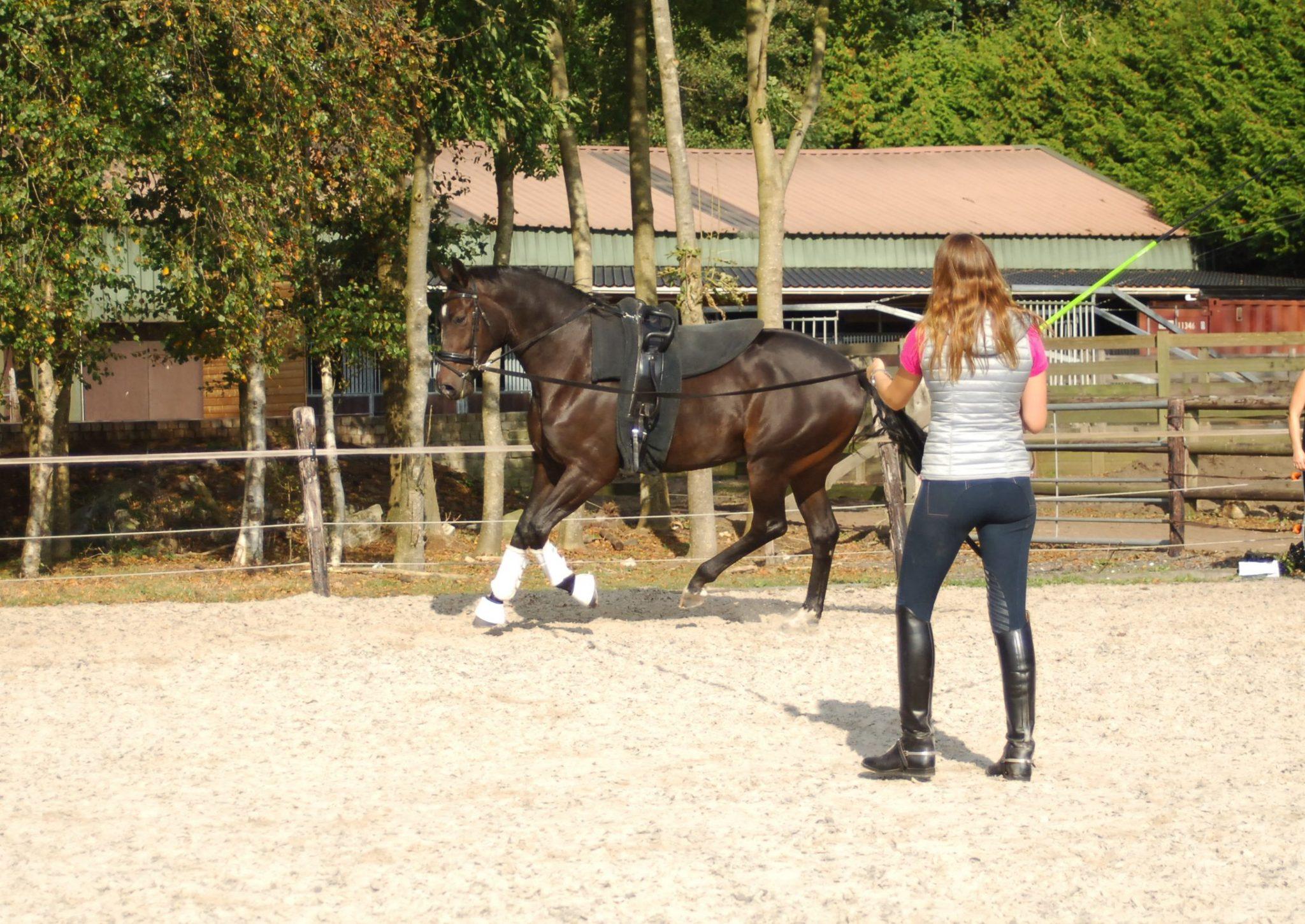 Winter Horsetraining – VaultingNews